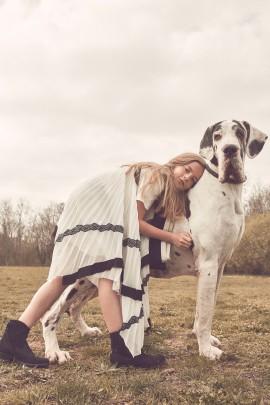 COCO AMARDEIL / WESTERN DOGS